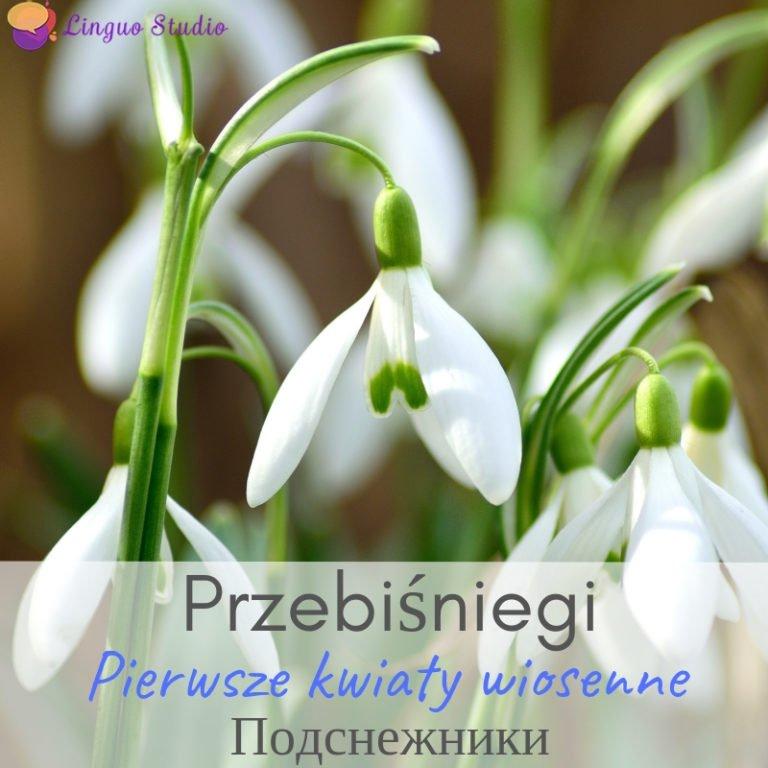 Польская лексика #4