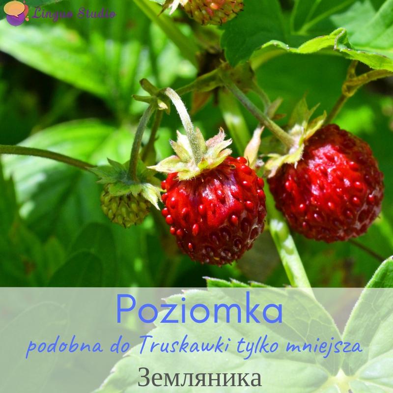 Польская лексика #7