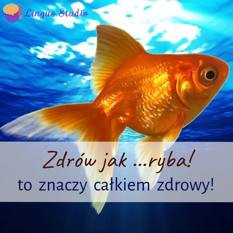 Польская лексика #33